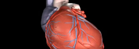 Animation of Ventricular