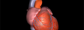 Learn about Bradycardia (slow heart) by watching our educational video